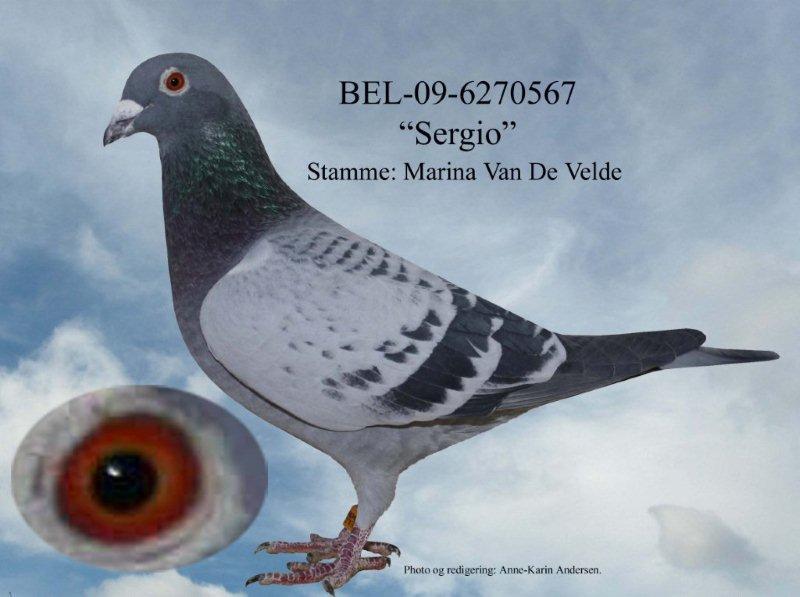 BEL-09-6270567