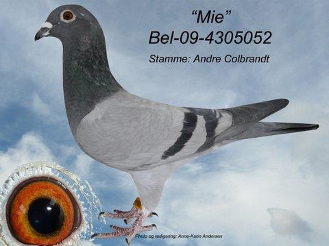 U-BEL-09-4305052