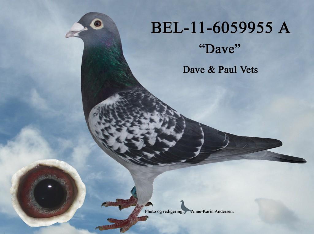 A-BEL-11-6059955