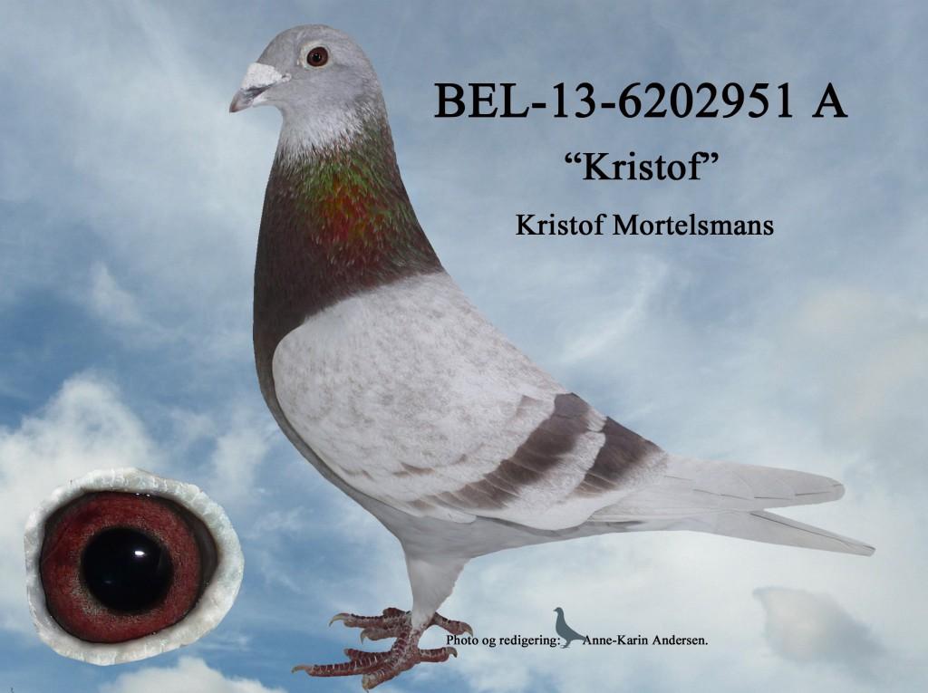 A-BEL-13-6202951