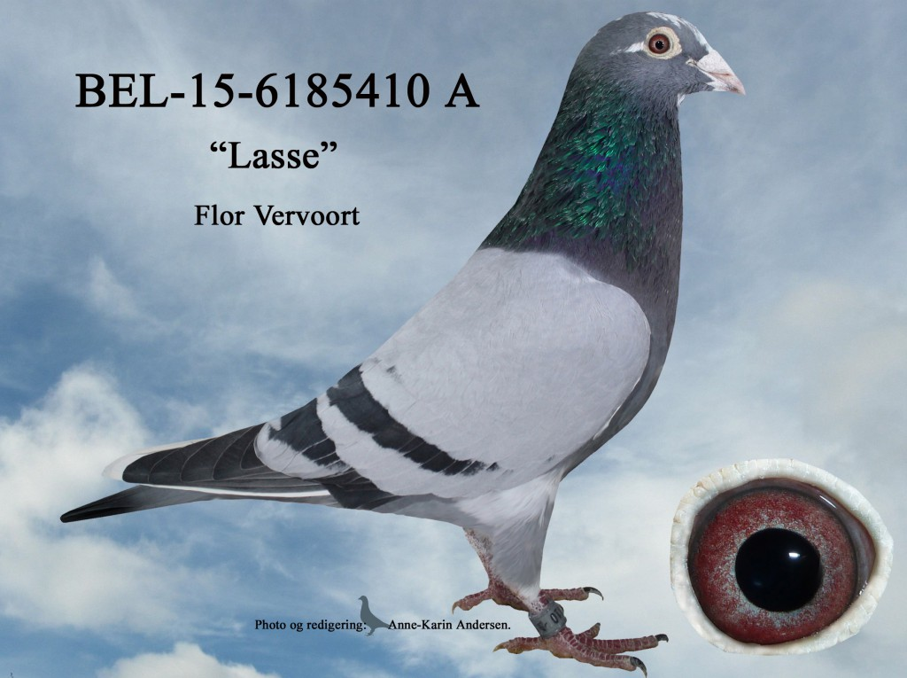 A-BEL-15-6285410