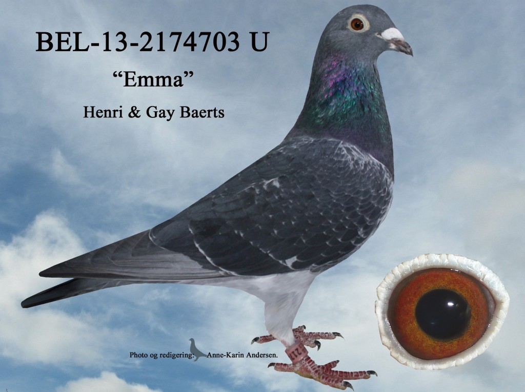 U-BEL-13-2174703