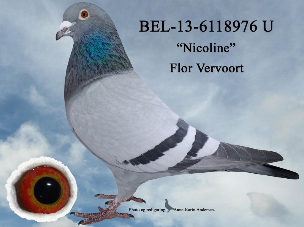 U-BEL-13-6118976