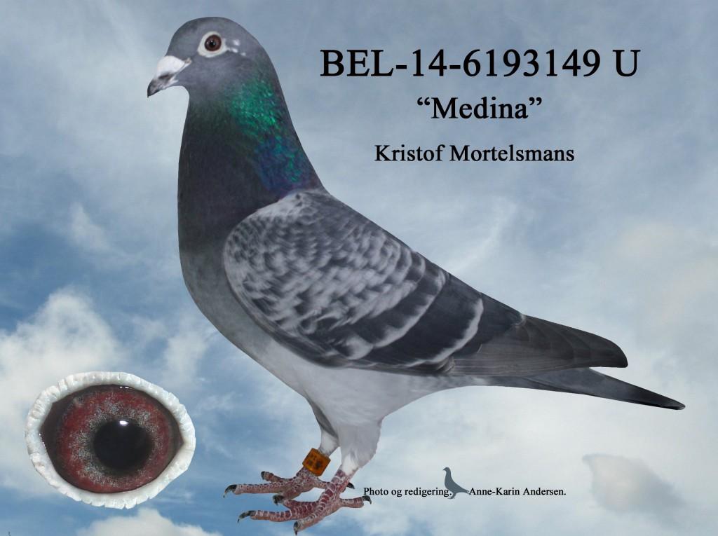 U-BEL-14-6193149